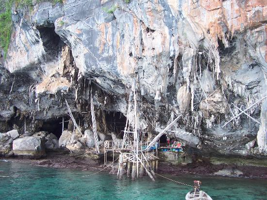 Phi Phi Islands: The entire island's mountains are hollow, and inside they gather birds nests