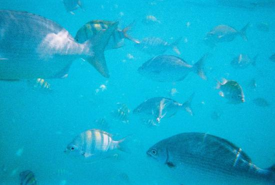Little Arches Boutique Hotel : Snorkeling with fish