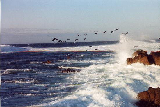Monterey, Kaliforniya: seagull