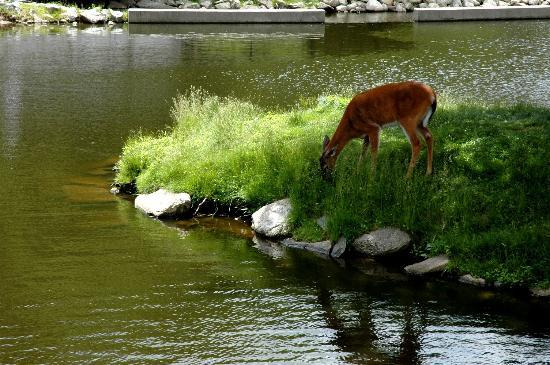 Buttonwood Park Zoo : Deer Exhibit