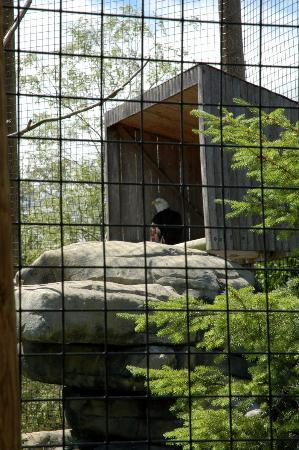 Buttonwood Park Zoo: Eagle Exhibit