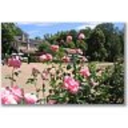 Parc de la pagode de Chanteloup : Beautiful rose bushes