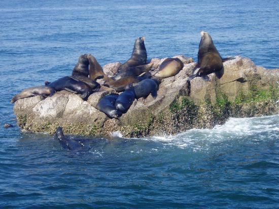Mazatlan, Mexico: Stone Island tour