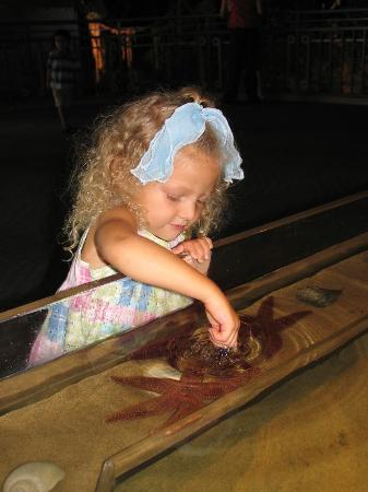 Adventure Aquarium: Kennedy touches a starfish