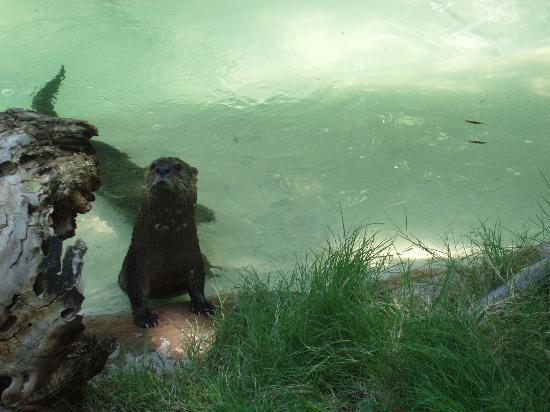 Phoenix, Arizona: Otters
