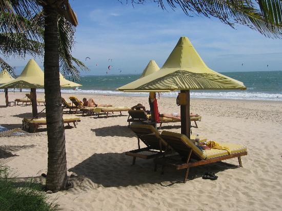 coco beach resort  beachside lounge chairs or hammocks beachside lounge chairs or hammocks   picture of coco beach resort      rh   tripadvisor