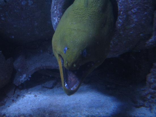 Atlantis - Harborside Resort: Scary EEL!