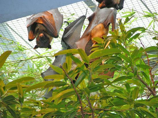 Cincinnati Zoo & Botanical Garden Photo