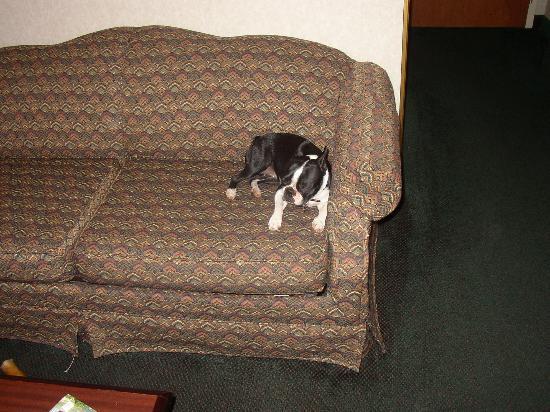Bonnie at Comfort Suites
