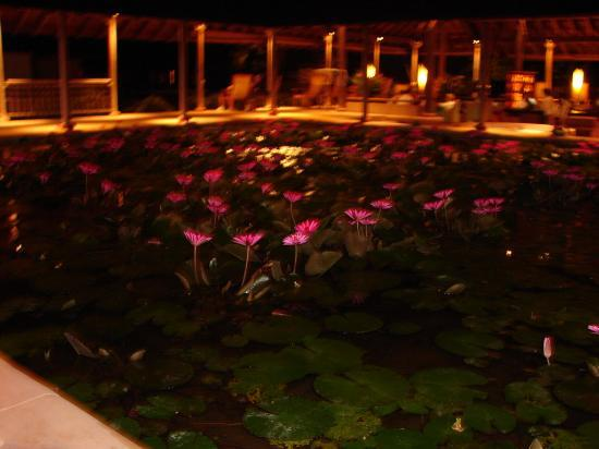 The Datai Langkawi: The pond in the Lobby/Bar - Some cute frogs in here!