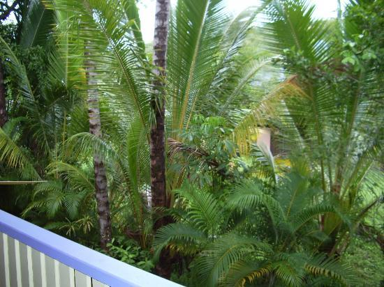 Tropical Reef Apartments : Balcony view
