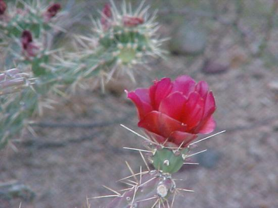 Phoenix Resmi