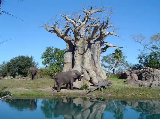 Walt Disney World, FL: Animal Kingdom