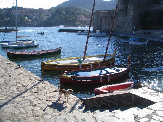Collioure, Frankrike: Fishing boats