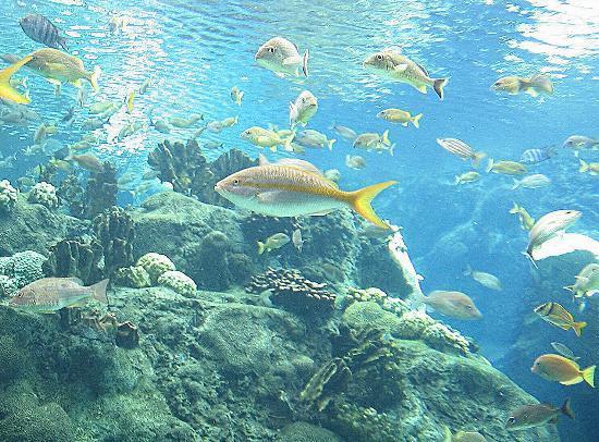 The Florida Aquarium : Through the looking glass