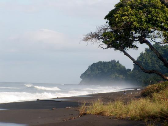 Playa Hermosa, Kosta Rika: Surfer's Tree