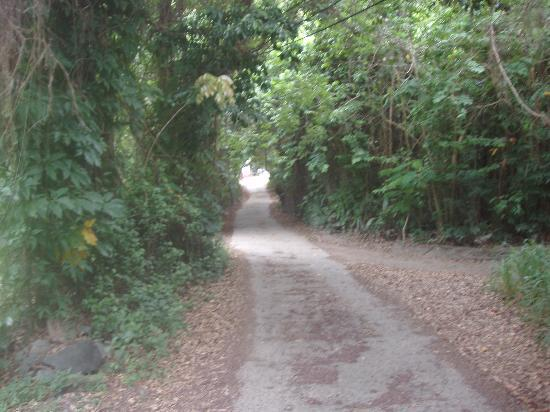 Path to Mongoose Apartments