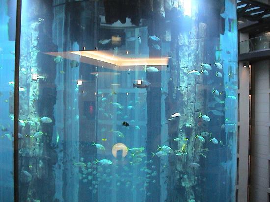 Fish tank in lobby picture of radisson blu hotel berlin for Floor aquarium