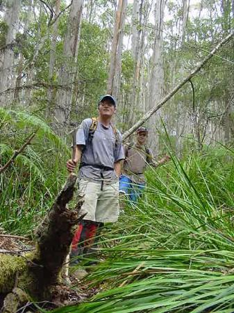 Walkinf through the forest to Cape Raoul