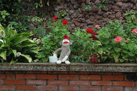 ‪‪Casa Girasol‬: Sock-monkey enjoing coffee in the garden‬