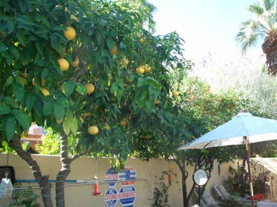 Old Ranch Inn: Enjoy the grapefruit & tangerines ... yum!