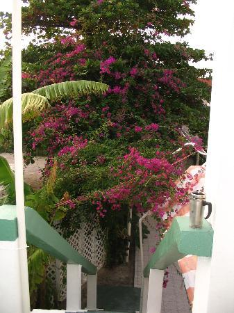 Corona del Mar Hotel & Apartments: Floral Trees