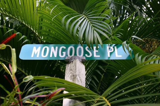 Zdjęcie Mongoose Apartments