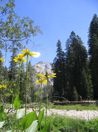 Parc national de Sequoia and Kings Canyon, Californie : Hiking to Tokopah Falls