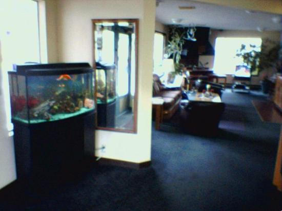 Coachman Inn: I liked the fish in the lobby!