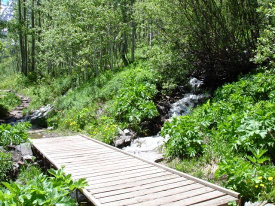 Crater Lake Trail : Small Waterfall & Footbridge