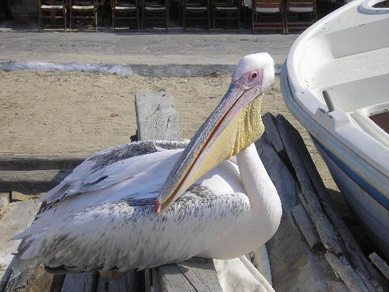 Mykonos, Greece: pelican