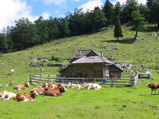 Slovenië Foto
