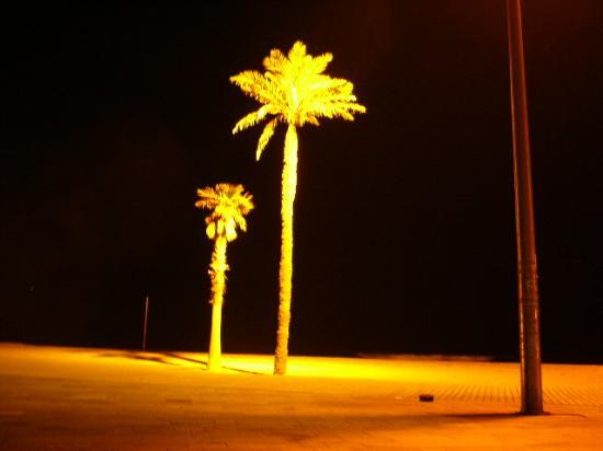 Equity Point Sea - Hostel Barcelona: the palm trees..