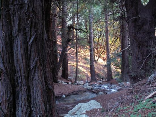 Julia Pfeiffer Burns State Park: Beautiful red wood trees along the river