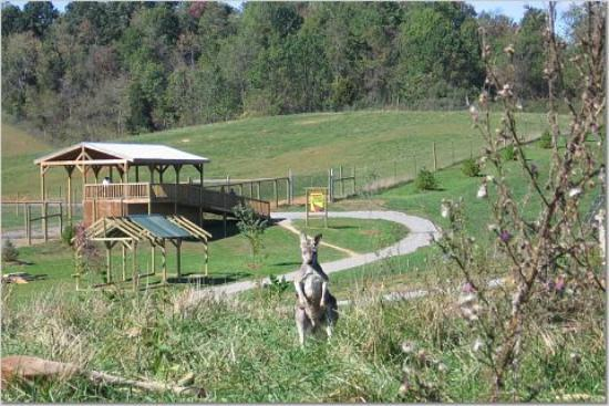 Virginia Safari Park : One in the distance gets up