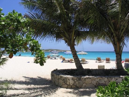 Anguilla: Prickly Pear