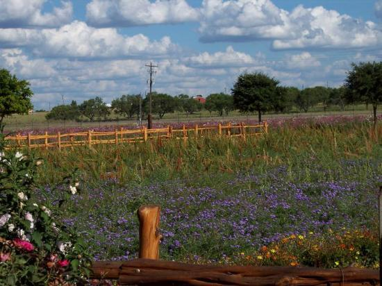 Fredericksburg, Техас: Wildseed Farm