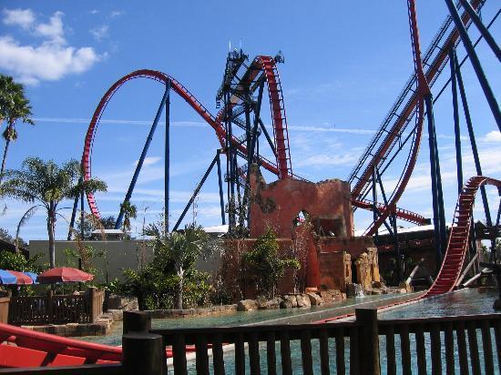 Sheikra Goes Thru The Water Picture Of Busch Gardens