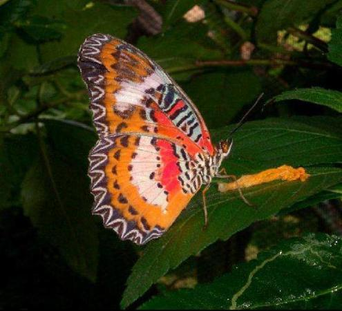 Jardín de las mariposas de Boracay