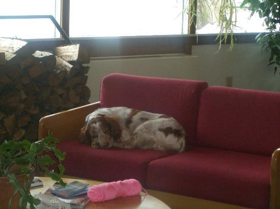 The Mountaineer Inn at Stowe: Bo hangin on the couch