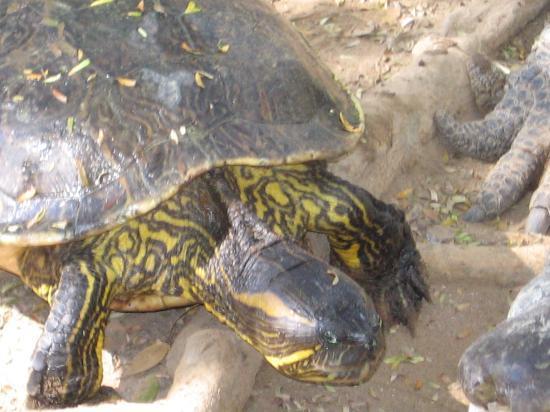 Acuario Mazatlan: Turtles