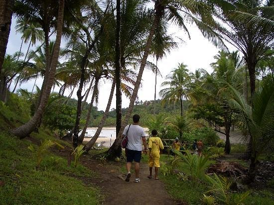 Jeribucacu Beach: TRAIL TO ONE OF THE BEACHES IN ITACARE