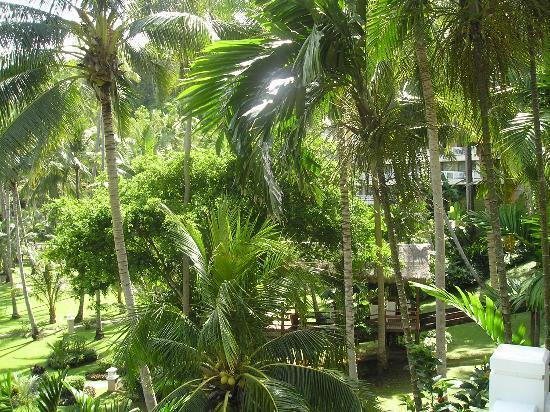 โรงแรมเคปพันวา: View from our balcony