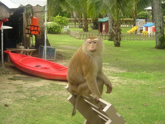 โรงแรมเคปพันวา: Another monkey