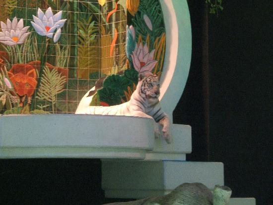 Asian Elephant Picture Of Siegfried Roy 39 S Secret Garden And Dolphin Habitat Las Vegas