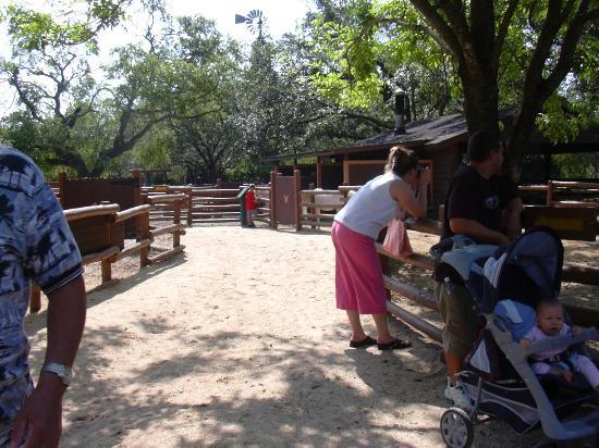 The Campsites at Disney's Fort Wilderness Resort: Fort Wilderness Children's Petting Zoo