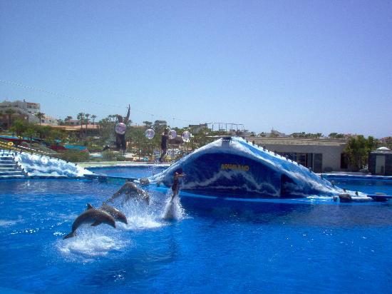 Ocean Beach Aparthotel: dolphin show aqualand