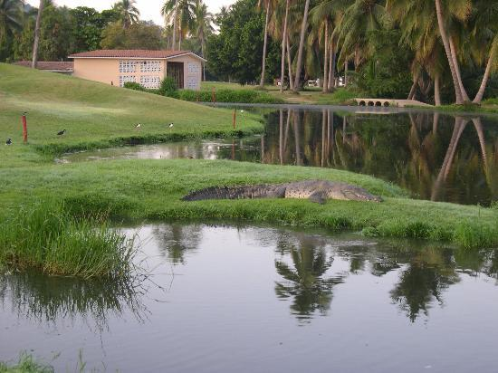 Campo de Golf Ixtapa: Live Water Hazard