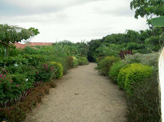Hamanasi Adventure and Dive Resort: The walkway is a horticultural lesson