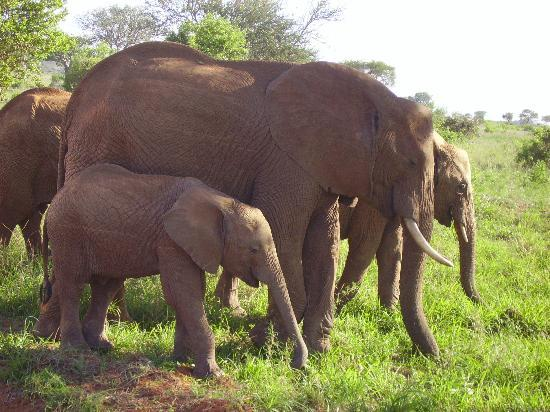 Mombasa, Kenia: Family outing!!